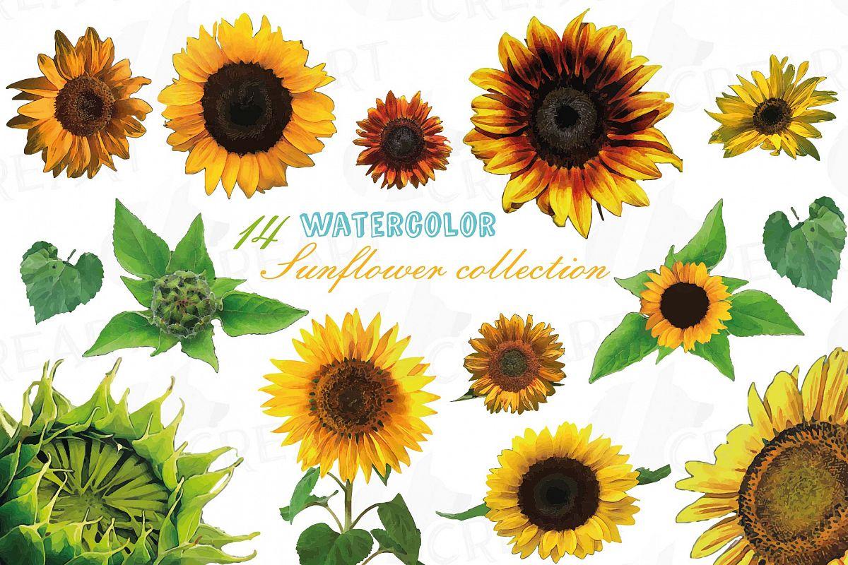 Sunflower watercolor clipart clip Sunflower watercolor clip art pack, sunflower decoration clip