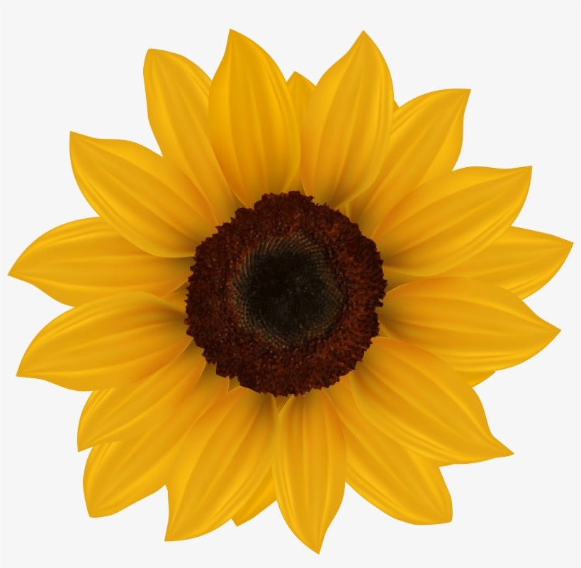 Sunflowers clipart sign graphic royalty free library Sunflower Png Clipart Image - Sunflowers Clipart Transparent ... graphic royalty free library