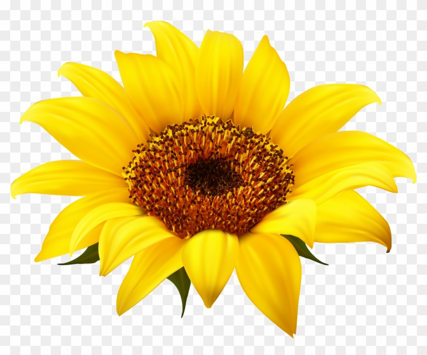 Sunflowers clipart sign stock Sunflower - Sunflower Clipart Png, Transparent Png ... stock