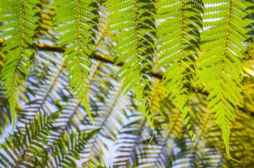 Sunny forest glen vector clipart vector freeuse library Search photos \