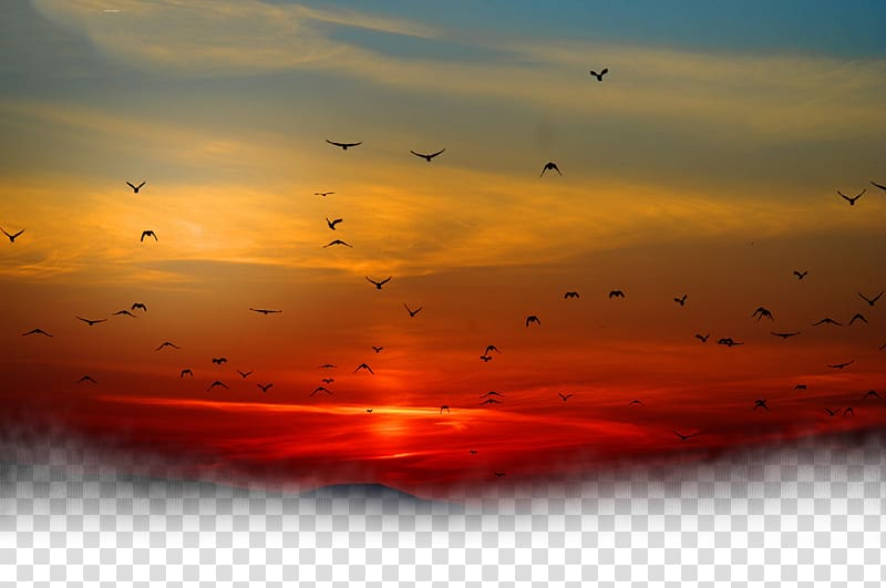 Sunset sky clipart png library library Silhouette of birds flying during golden time, Sunset Sky ... png library library