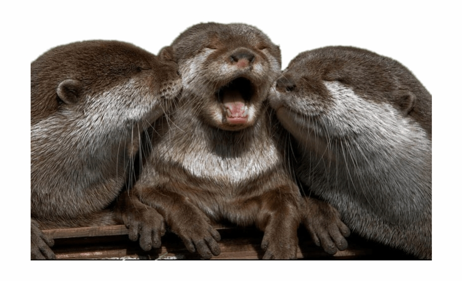 Super cute baby otters clipart picture Cuddling Otters Cute Super Cute Otter - Clip Art Library picture