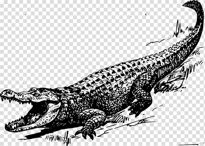 Swamp black and white clipart jpg free stock Alligator Crocodile Black and white , Swamp transparent ... jpg free stock