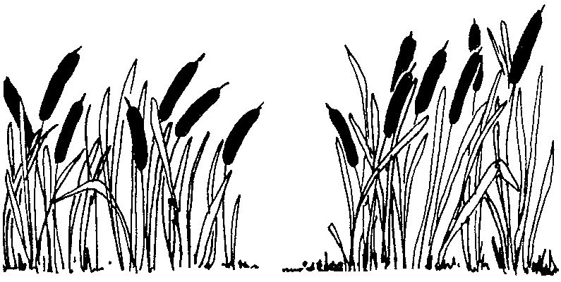 Swamp black and white clipart png royalty free stock Swamp Plants Clipart Swamp Plants Clipart | Vectors | Grass ... png royalty free stock