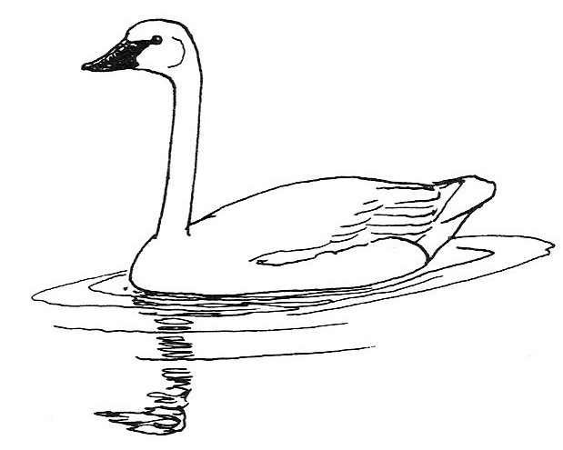 Swan black and white clipart svg library Free Swan Cliparts, Download Free Clip Art, Free Clip Art on ... svg library