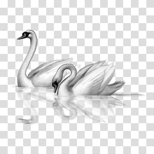 Swan clipart with no background png royalty free Swan PNG clipart images free download | PNGGuru png royalty free