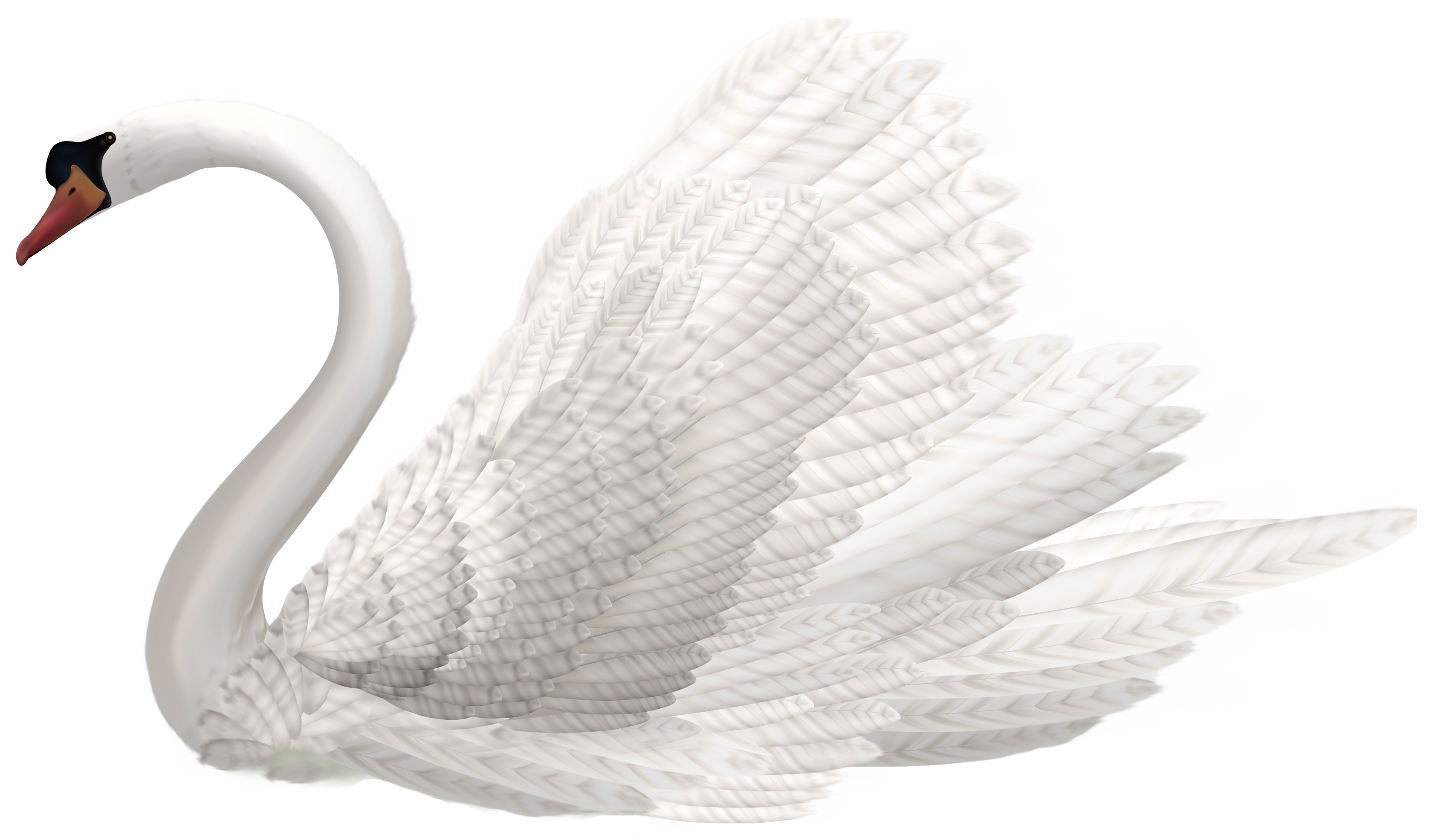 Swans feather clipart png free library White Swan PNG Clipart Image - Best WEB Clipart png free library