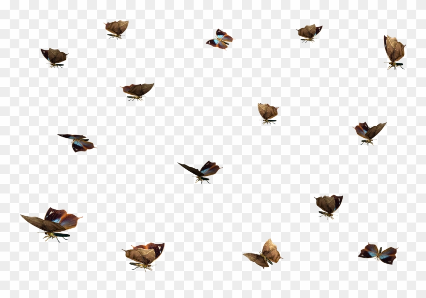 Swarm clipart picture royalty free Clipart Till Photoshop - Swarm Of Butterflies Transparent ... picture royalty free