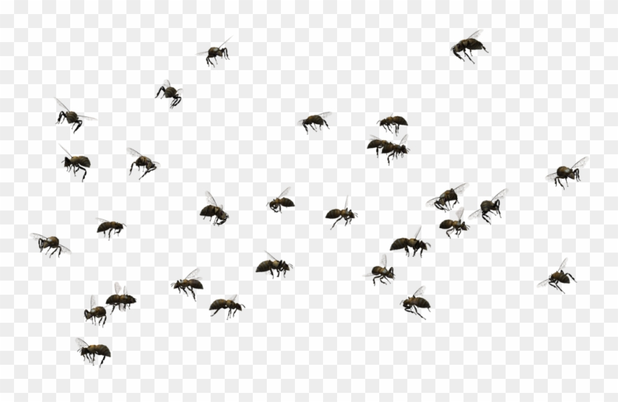 Swarm clipart graphic Picture Transparent Stock Honey Bee Swarming Insect - Swarm ... graphic