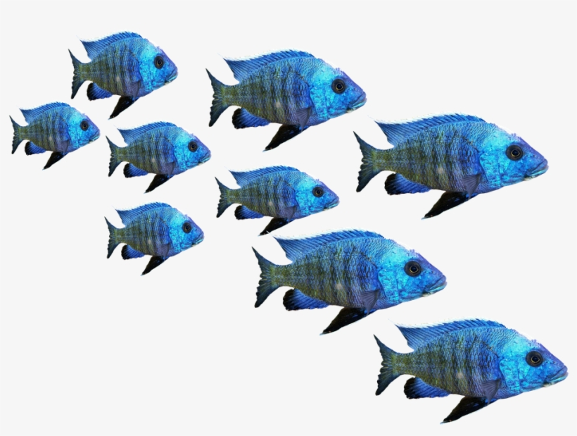 Swarms of fish clipart clipart free stock Fish, Fish Swarm, Perch, Sea, Lake, Water, Nature - Fish ... clipart free stock