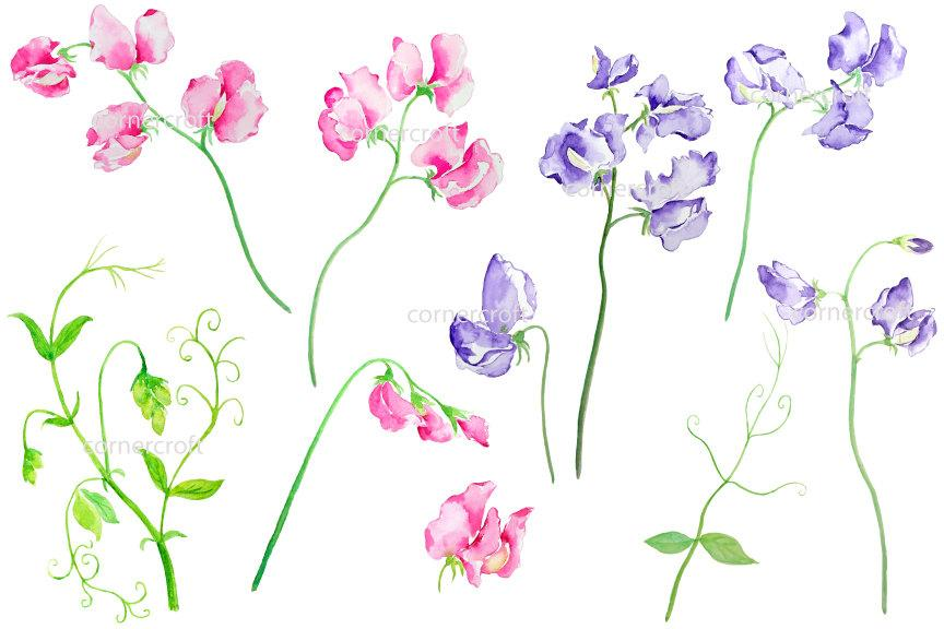 Sweet pea clipart picture library library Sweet pea clipart, pink sweet peas, purple sweet peas instant download picture library library