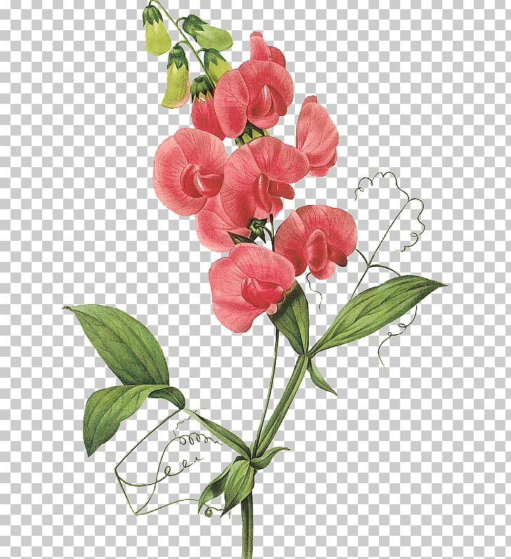Sweet pea clipart image stock Broad-leaved Sweet Pea Flower PNG, Clipart, Birth Flower ... image stock