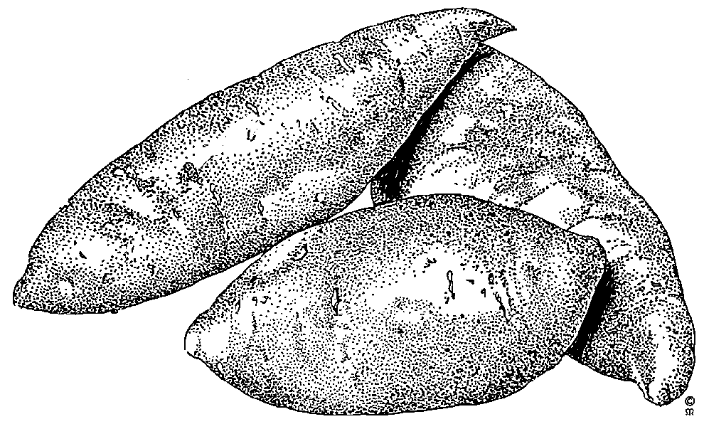 Sweet potato clipart black and white free png free Free Yam Cliparts, Download Free Clip Art, Free Clip Art on ... png free