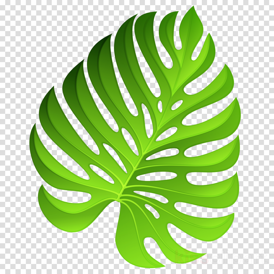 Swiss cheese plant clipart clip art royalty free download Swiss Cheese Plant, Plants, Houseplant, transparent png ... clip art royalty free download
