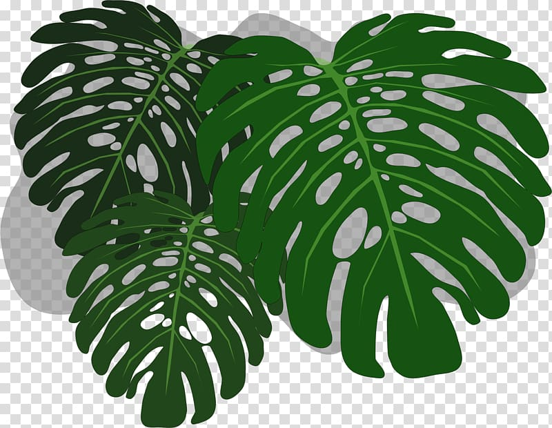 Swiss cheese plant clipart picture free Philodendron Swiss cheese plant , mint leaf transparent ... picture free