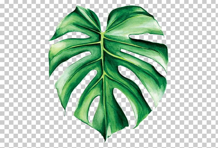 Swiss cheese plant clipart jpg free library Swiss Cheese Plant Watercolor Painting Leaf Tropics PNG ... jpg free library