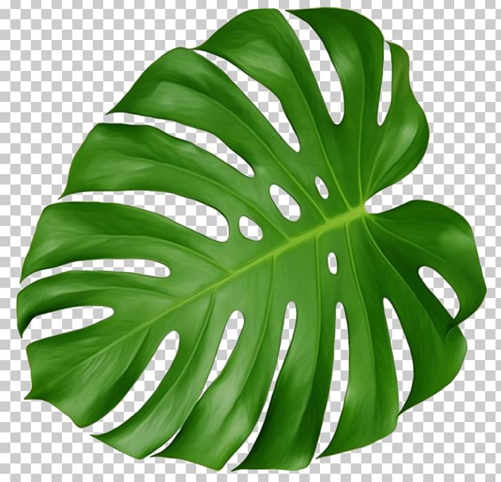 Swiss cheese plant clipart clipart free download Swiss Cheese Plant Leaf Houseplant Plant Leaves PNG, Clipart ... clipart free download