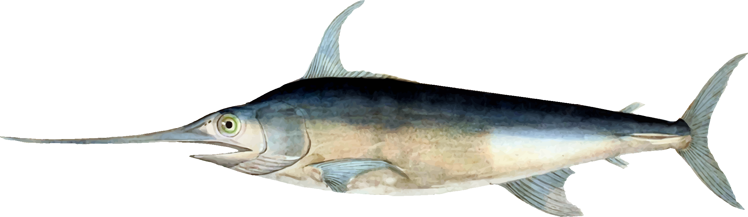 Sword fish clipart picture Swordfish 3 Icons PNG - Free PNG and Icons Downloads picture