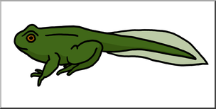 Tadpole clipart image library stock Collection of Tadpole clipart | Free download best Tadpole ... image library stock