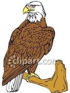 Talking eagle clipart png A Bald Eagle on a Tree Branch - Royalty Free Clipart Picture png