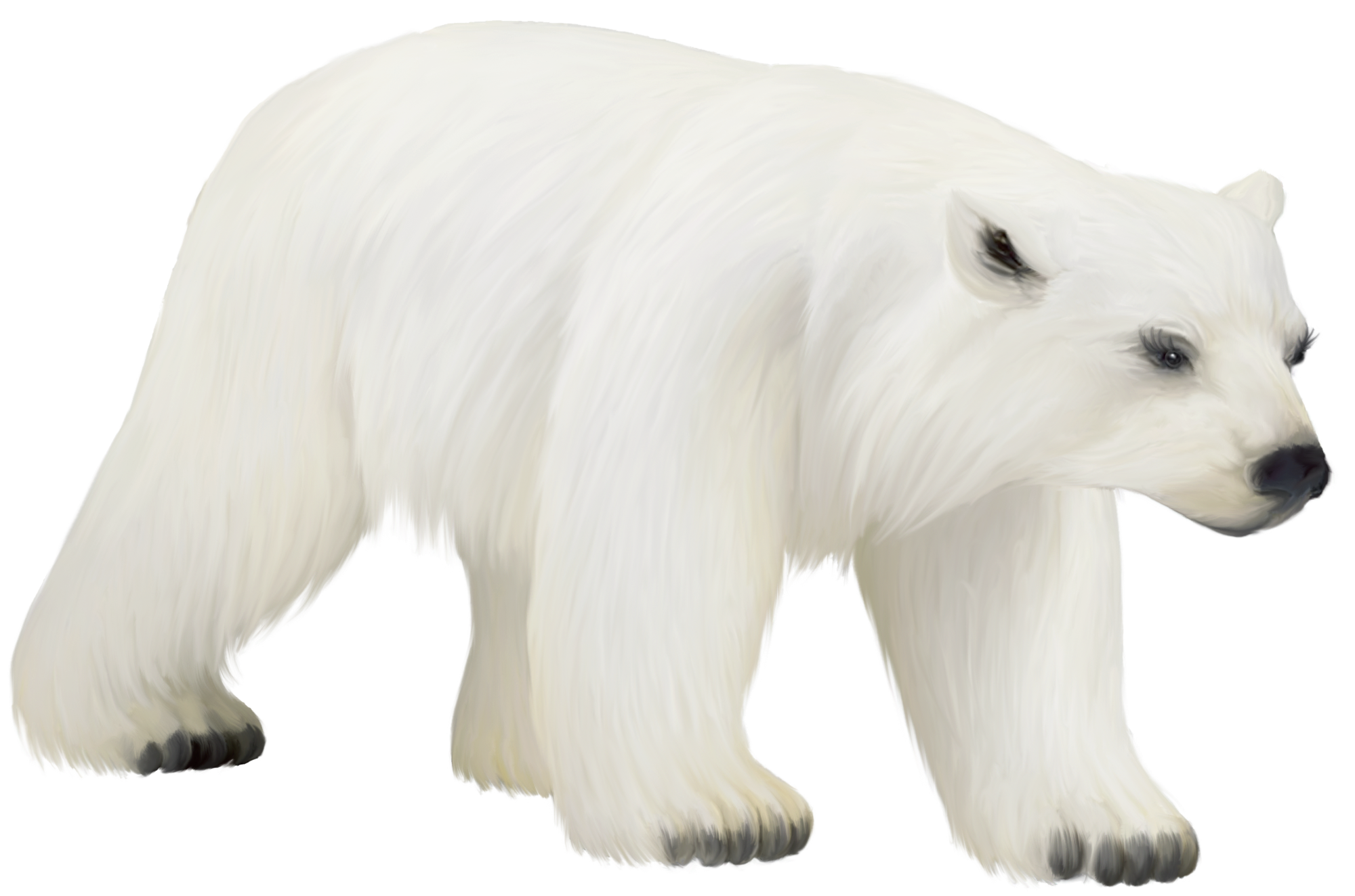 Talking polar bear clipart image royalty free download Polar bear bear clip art vector bear graphics image 2 | Book ... image royalty free download