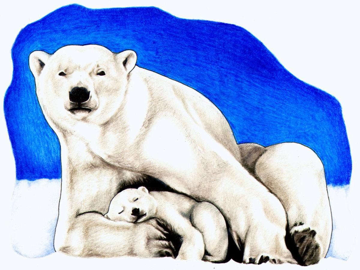 Talking polar bear clipart picture transparent stock Polar Bears Clipart | Free download best Polar Bears Clipart ... picture transparent stock