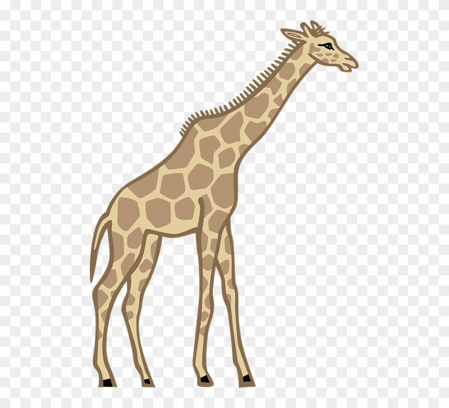 Tall clipart png library stock Free Giraffe Clipart Photos And Free Pictures - Tall Clip ... png library stock