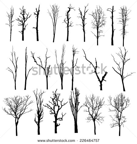 Tall thin tree clipart vector transparent 1000+ images about Trees on Pinterest | How to draw trees, Clip ... vector transparent