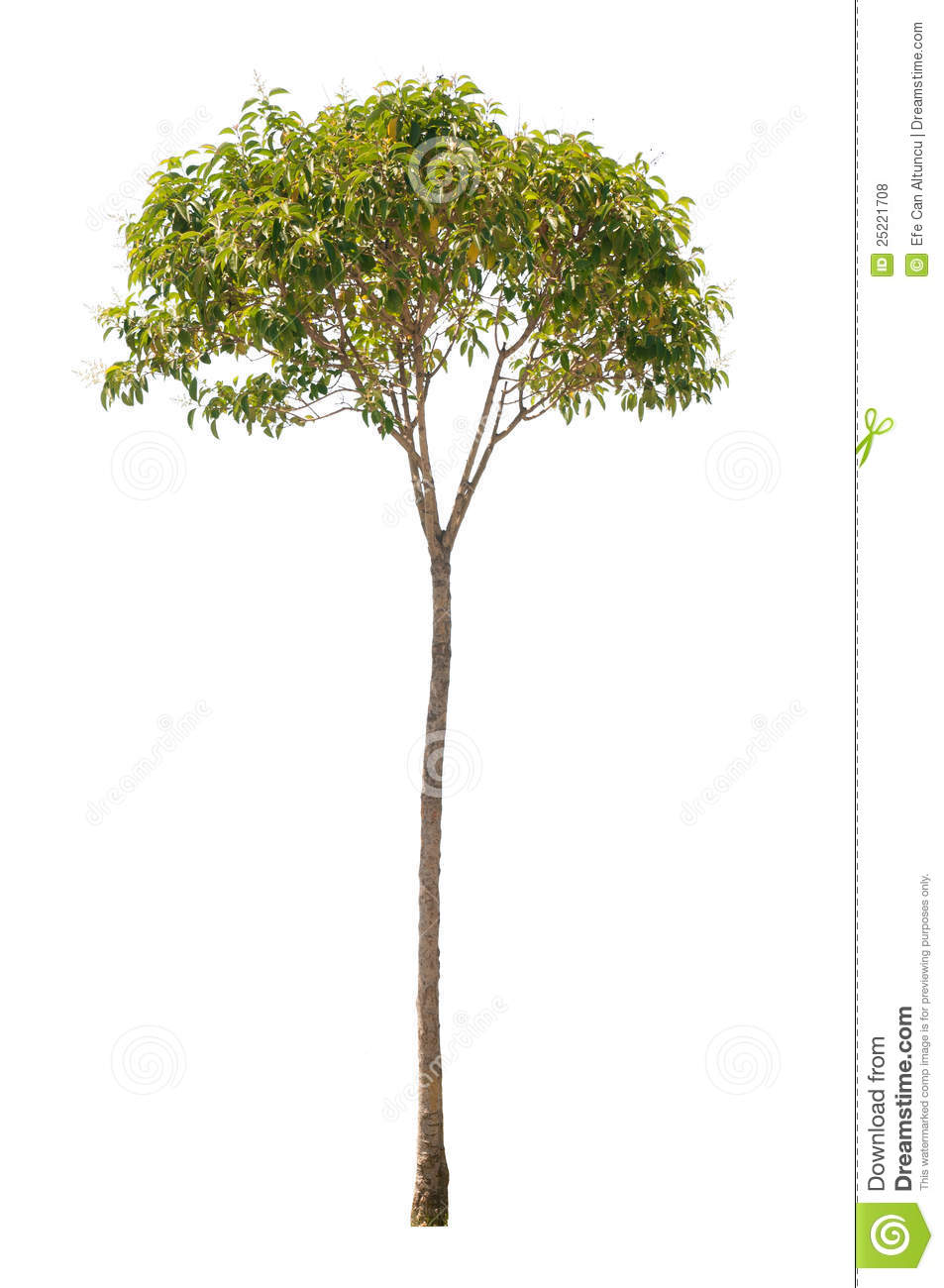 Tall thin tree clipart svg Isolated Tree Royalty Free Stock Photos - Image: 25221708 svg