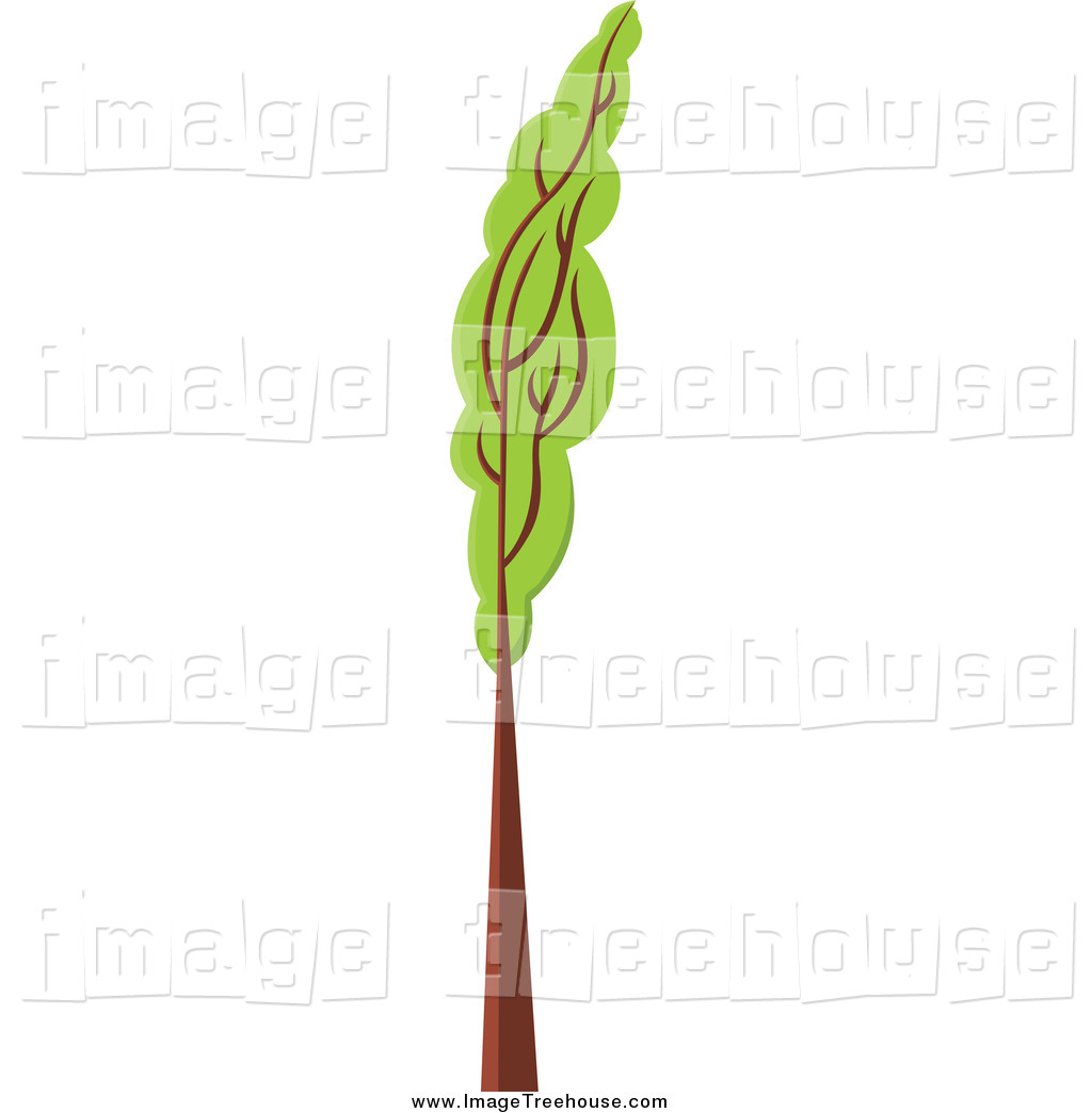 Tall thin tree clipart graphic stock Royalty Free Stock Tree Designs of Plants - Page 4 graphic stock
