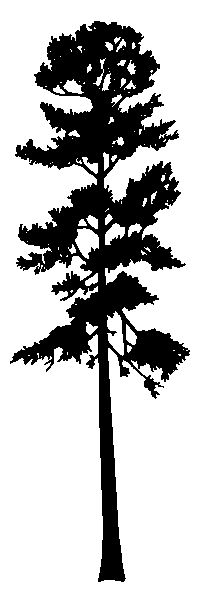 Tall thin tree clipart vector freeuse stock 17 Best images about trees on Pinterest | Tree line, Pine and Trees vector freeuse stock