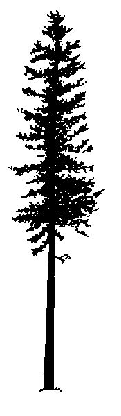 Tall thin tree clipart png transparent library Tall Skinny Tree Clipart - clipartsgram.com png transparent library