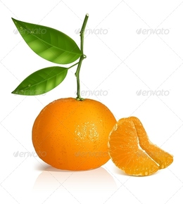 Tangine clipart clip royalty free stock Download tangerine vector clipart Tangerine Royalty-free clip royalty free stock