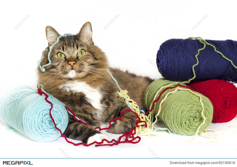 Tangled yarn clipart picture freeuse stock Cat Tangled In Yarn Stock Photo 50100616 - Megapixl picture freeuse stock