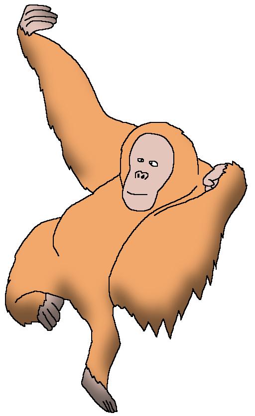 Tapanuli orangutan clipart svg royalty free stock Sumatran Orangutan | Wildlife Animal Pedia Wiki | FANDOM ... svg royalty free stock