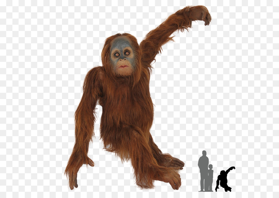 Tapanuli orangutan clipart png freeuse download Monkey Cartoon png download - 640*640 - Free Transparent ... png freeuse download