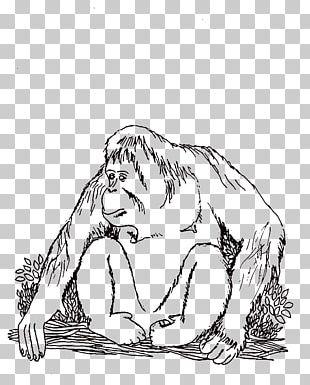 Tapanuli orangutan clipart clip transparent download Tapanuli Orangutan PNG Images, Tapanuli Orangutan Clipart ... clip transparent download