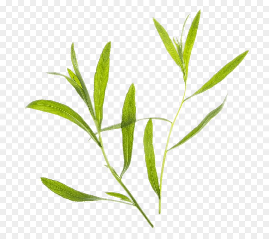 Tarragon clipart png transparent stock Family Tree Background clipart - Plant, Leaf, Tree ... png transparent stock