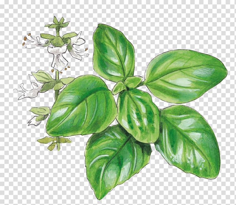 Tarragon clipart freeuse library Basil Pianta aromatica Garden Herb Tarragon, basil ... freeuse library