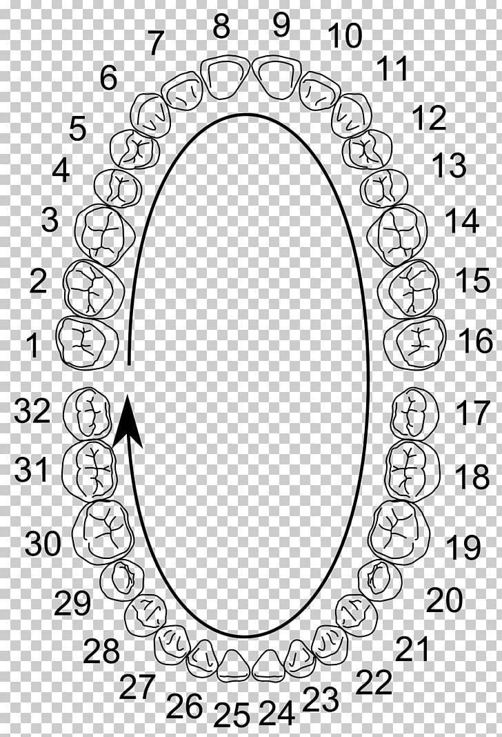 Teeth number chart clipart clip art free stock Universal Numbering System Human Tooth Deciduous Teeth ... clip art free stock