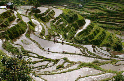 Terracing clipart clipart black and white library Banaue Rice Terraces Pictures, Photos & Facts - Ifugao, clipart black and white library