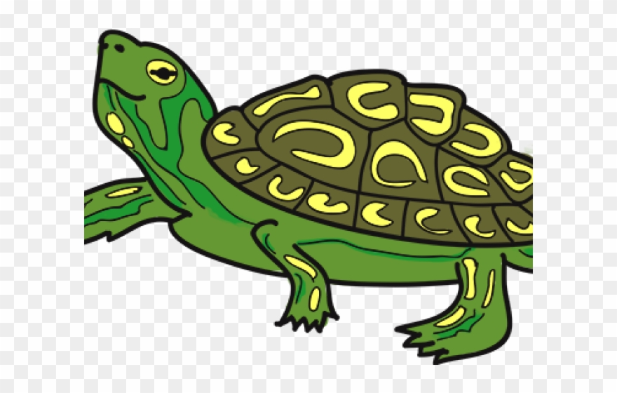 Terrapin image grateful dead clipart graphic free download Tortoise Clipart Terrapin - Boston - Png Download (#333985 ... graphic free download