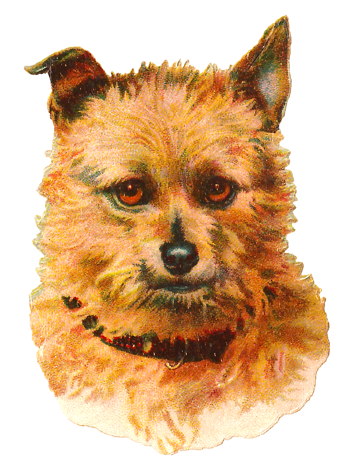 Terrier dog clipart clip art royalty free Antique Images: Dog Australian Terrier Vintage Animal Portrait Clip ... clip art royalty free