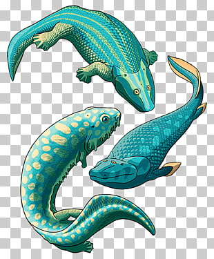 Tetrapods clipart clip library 32 tetrapod PNG cliparts for free download   UIHere clip library