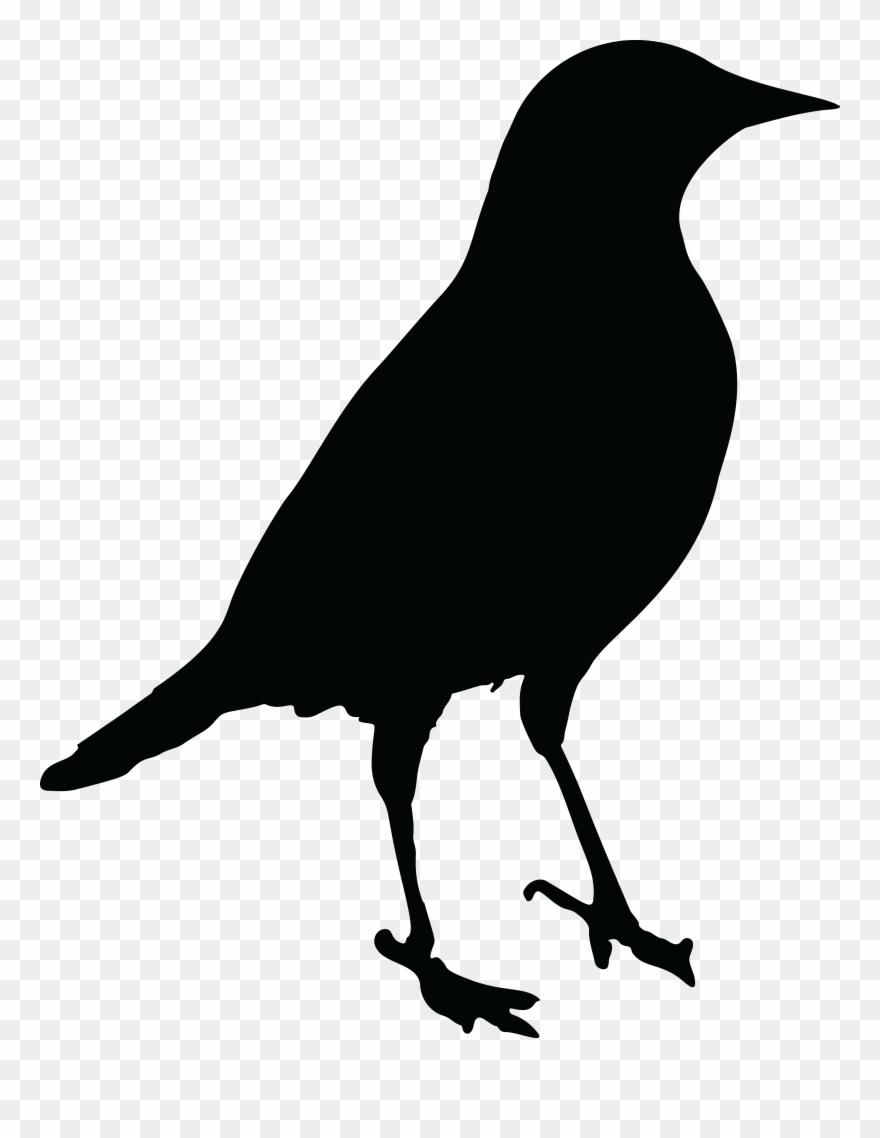 Texas bird clipart black and white siloette clip black and white stock Onlinelabels Clip Art Blackbird Silhouette - Clip Art Black ... clip black and white stock