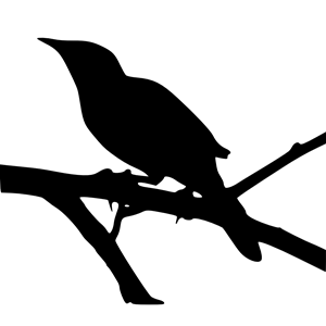 Texas bird clipart black and white siloette image free Mockingbird in Silhouette clipart, cliparts of Mockingbird ... image free