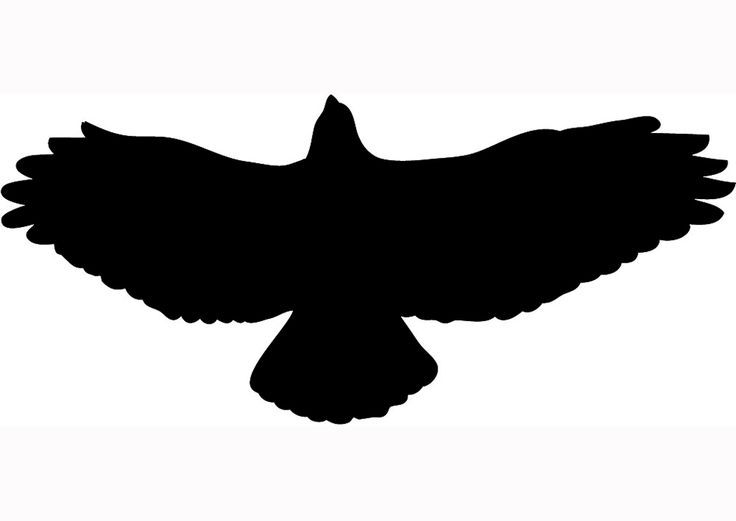 Texas bird clipart black and white siloette image stock Pin by Ange Pond on Silhouettes   Silhouette clip art, Hawk ... image stock