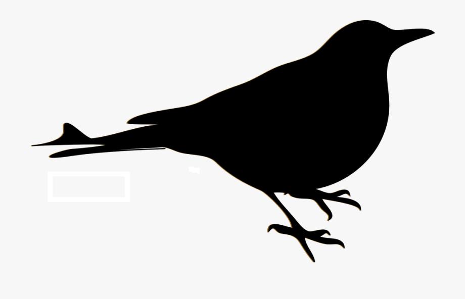 Texas bird clipart black and white siloette clipart Bird Blackbird Sillhouette Crow Raven Robin - Creative ... clipart