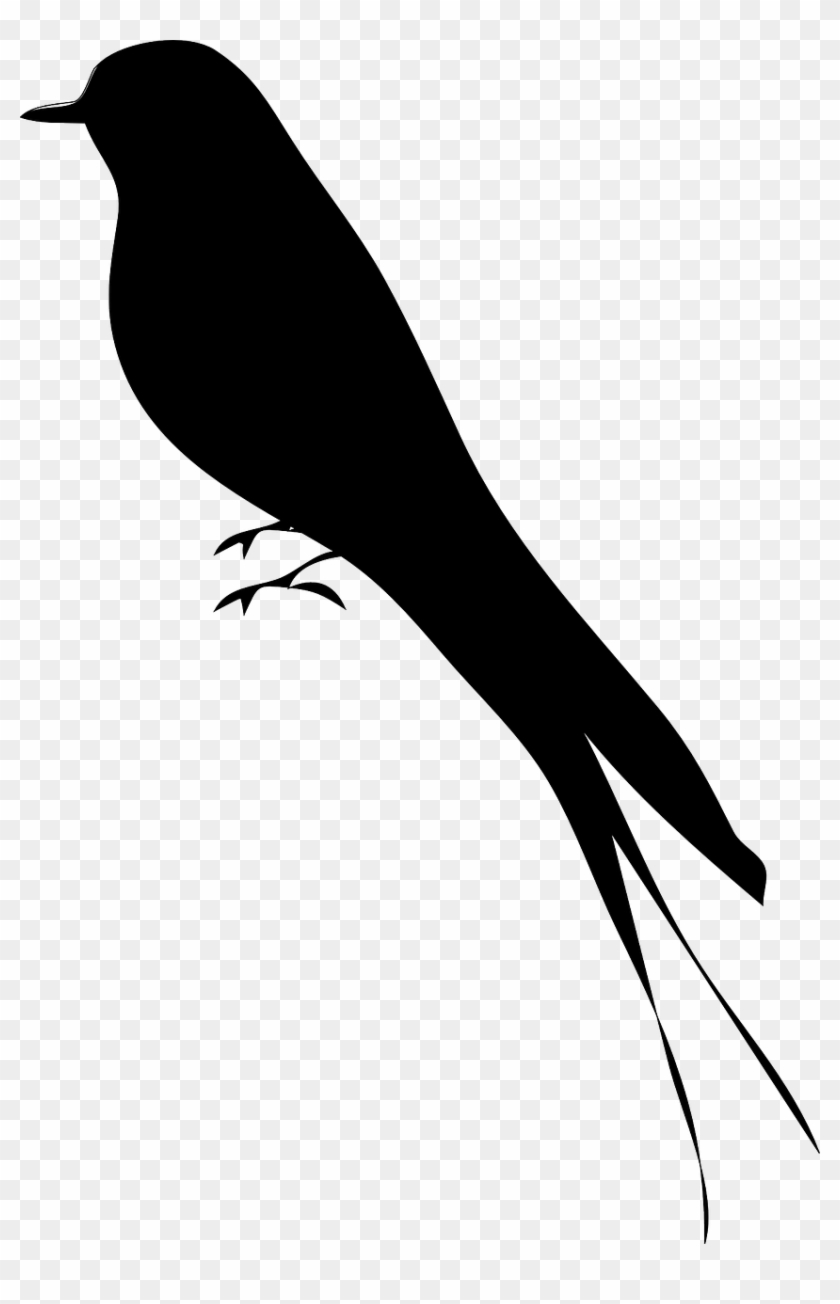 Texas state bird clipart black and white siloette picture transparent Bird Silhouette Mockingbird - Bird Silhouette, HD Png ... picture transparent