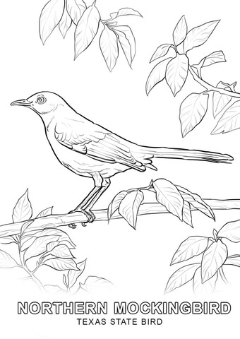 Texas state bird clipart black and white siloette png Texas State Bird coloring page | Free Printable Coloring Pages png